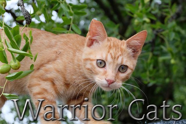 Warrior-cats