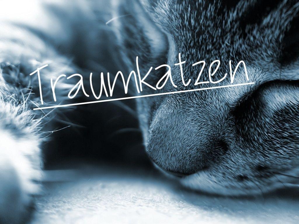 Traumkatzen