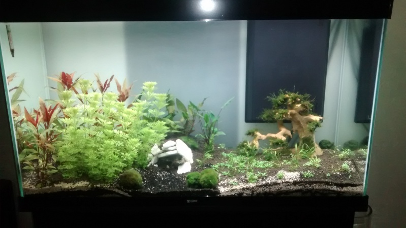 algue dans mon aquarium forum aquarium. Black Bedroom Furniture Sets. Home Design Ideas