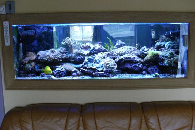 quelques aquarium d eau de mer