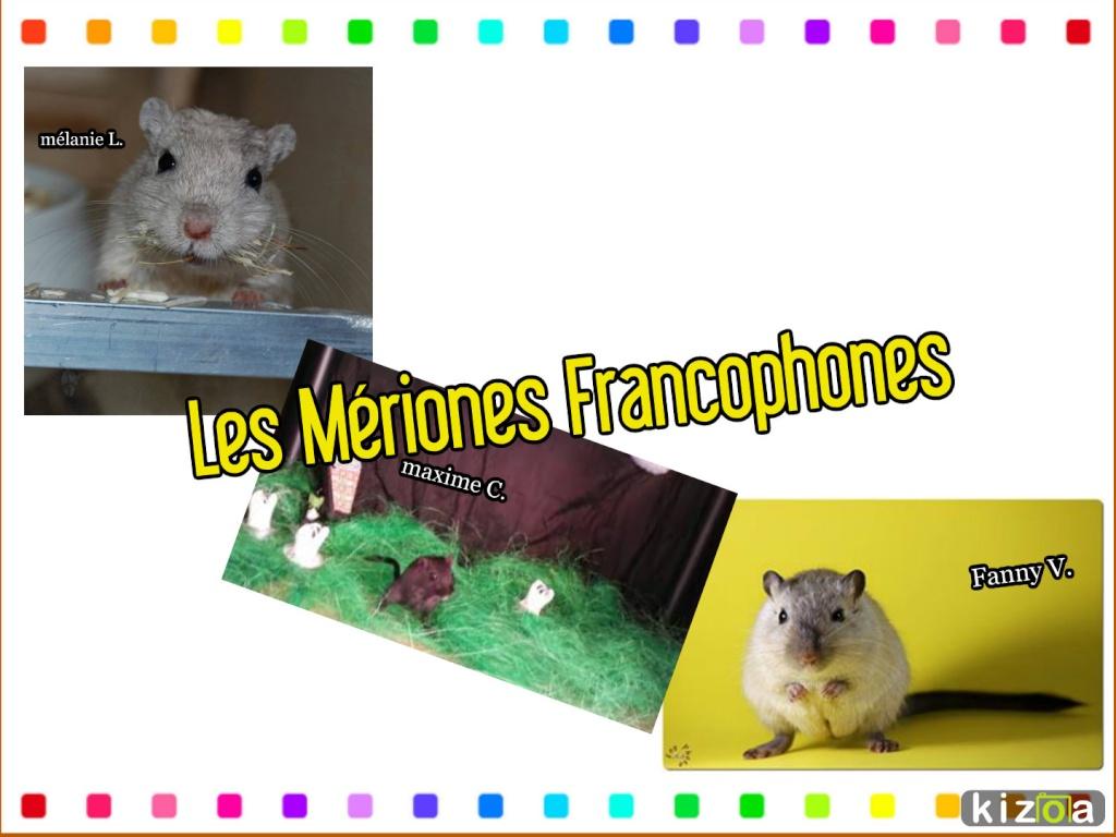 Les Mériones Francophones