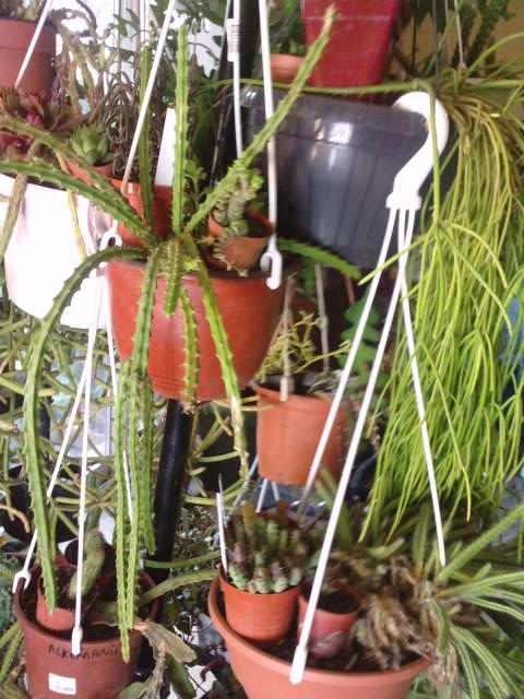 Mes plantes en hiver for Plante en hiver