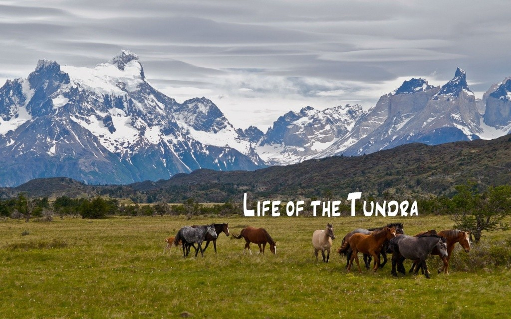 .:Horse RP:. Life of the Tundra