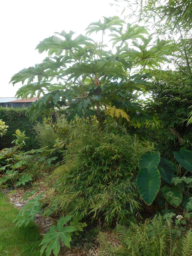 Le jardin d 39 olivierd en belgique page 2 for Jardin belgique