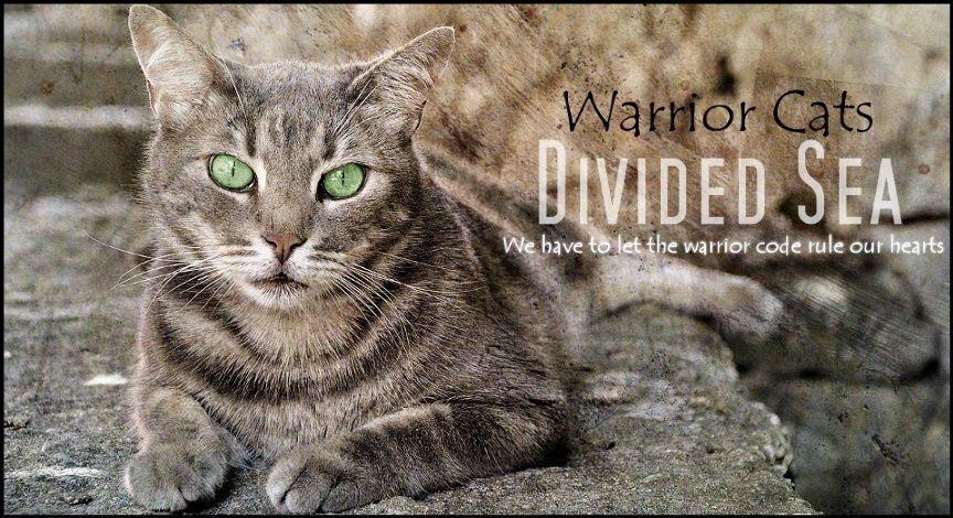Warrior Cats - Divided Sea