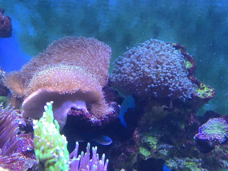 Vente de blue44 for Vente aquarium complet