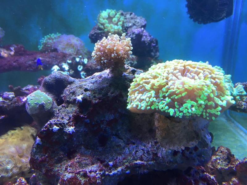 Vente de blue44 r cif a l 39 ouest for Vente aquarium complet