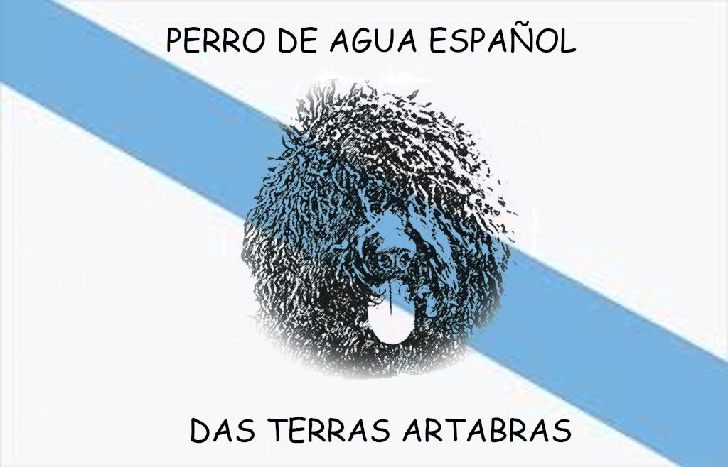 perro de agua español das terras artabras