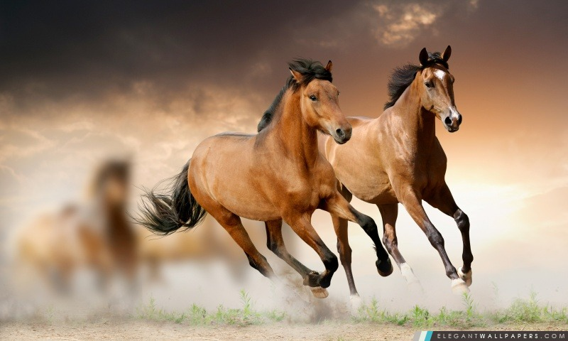 Ado passion chevaux